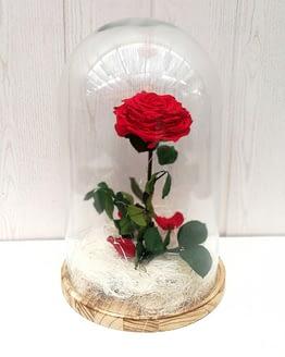 rosa roja en cúpula desde arriba