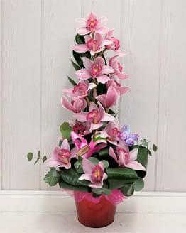 orquideas rosa