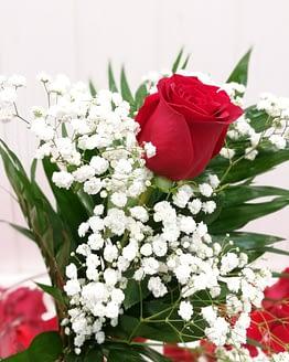 rosa roja individual 2