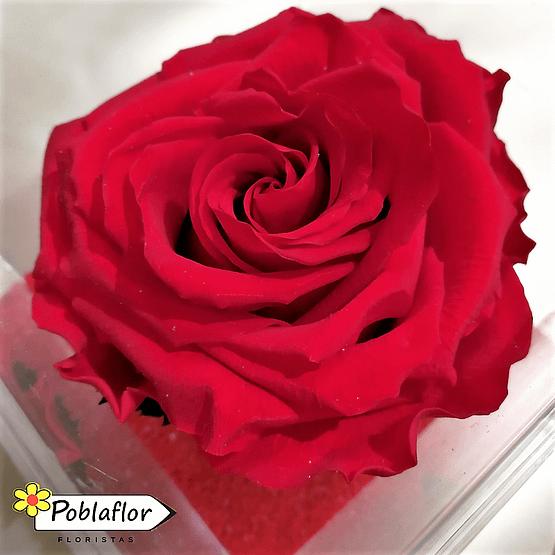 rosa roja en caja de metacrilato
